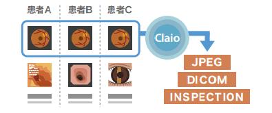 claio_export